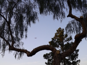 jet and tree
