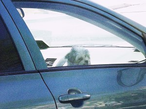 The doggy in the car window _RMH
