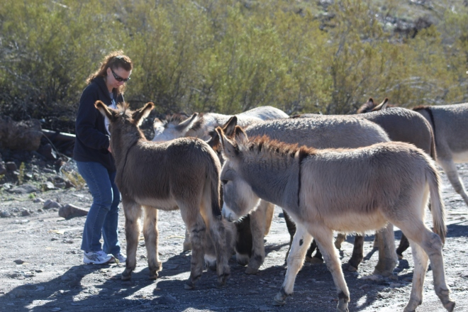 donkeys and tammy 2.JPG