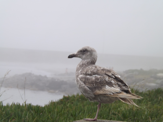 beach seagull profile