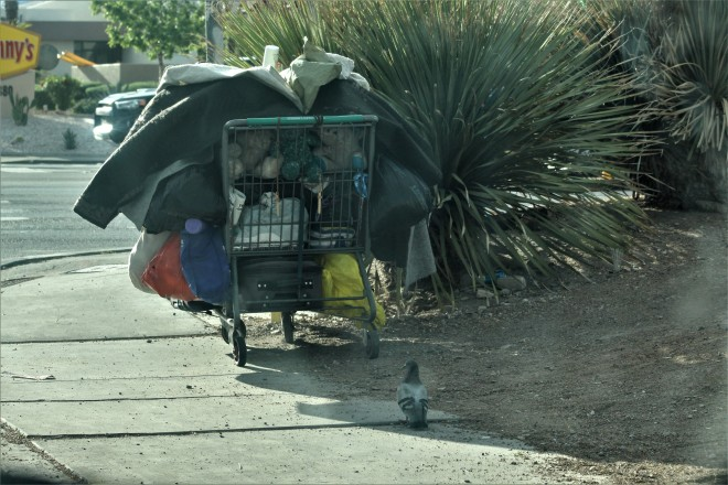shopping cart and pigeons.JPG