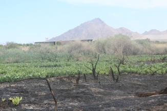 wetlands after fire