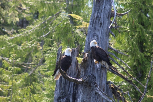 a two eagles posing